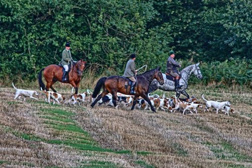Horses & Hounds From A Local Hunt